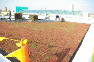 Green-roof Installation